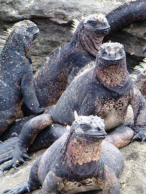 Adventure / Exploration vacation travel - The Galapagos Loop Extension A