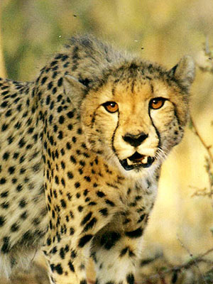 South Africa vacation package - Makutsi South Africa Classic Safari